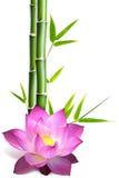 Fiore di loto e del bambù fotografie stock
