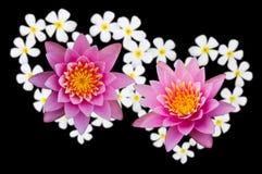 Fiore di loto Heart-shaped. Fotografia Stock