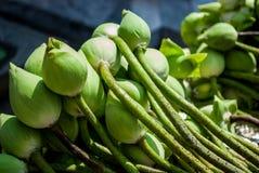 Fiore di loto verde Immagine Stock