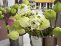 Fiore di Lotus 12 fotografia stock libera da diritti