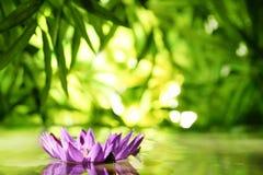 Fiore di Lotus che galleggia sull'acqua Fotografie Stock Libere da Diritti