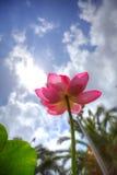 Fiore di Lotus HDR Fotografia Stock Libera da Diritti