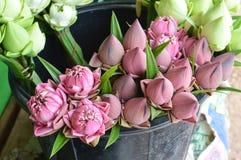Fiore di Lotus nel mercato Immagini Stock Libere da Diritti