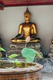 Fiore di Lotus nel monastero della Tailandia con il fondo della statua del buddah Fotografie Stock Libere da Diritti