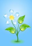 Fiore di lucentezza Immagine Stock