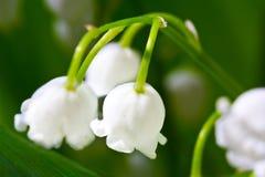 Fiore di macro del mughetto Immagini Stock Libere da Diritti