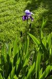 Fiore di macro della primavera Fotografie Stock Libere da Diritti