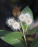 Fiore di mattina in primavera Immagini Stock