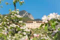Fiore di melo Meleti nel tempo di primavera nella campagna non della valle Val di Non, Trentino Alto Adige, AIS nordico immagine stock libera da diritti