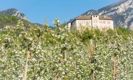 Fiore di melo Meleti nel tempo di primavera nella campagna non della valle Val di Non, Trentino Alto Adige, AIS nordico fotografie stock libere da diritti