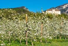 Fiore di melo Meleti nel tempo di primavera nella campagna non della valle Val di Non, Trentino Alto Adige, AIS nordico fotografie stock