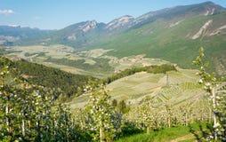 Fiore di melo Meleti nel tempo di primavera nella campagna non della valle Val di Non, Trentino Alto Adige, AIS nordico immagine stock