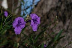 fiore di modo dell'orlo Immagine Stock