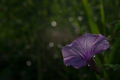 Fiore di modo dell'orlo, Immagine Stock Libera da Diritti