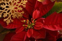 Fiore di Natale Fotografia Stock