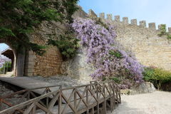 Fiore di Obidos fotografie stock