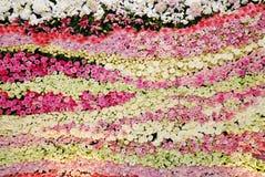 Fiore di parete Immagini Stock