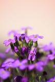 Fiore di parete Fotografia Stock Libera da Diritti