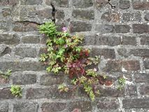 Fiore di parete Immagine Stock