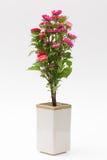 Fiore di Pasqua Fotografia Stock
