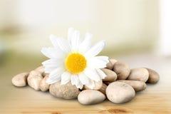 Fiore di pietra Immagine Stock