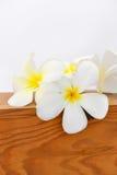 Fiore di plumeria Fotografia Stock Libera da Diritti