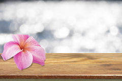 Fiore di plumeria Immagine Stock Libera da Diritti