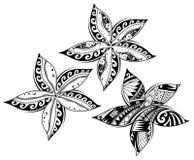Fiore di plumeria come tatuaggio tribale di stile Fotografie Stock