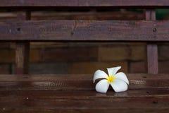 Fiore di plumeria su legno fotografie stock