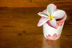 Fiore di plumeria su vetro Immagini Stock