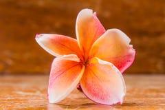 Fiore di plumeria sulla tavola di legno Fotografia Stock