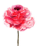 Fiore di Rosa Immagine Stock Libera da Diritti