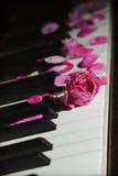 Fiore di rosa di colore rosa sui tasti del piano Immagini Stock
