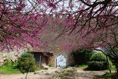 Fiore di rosa di Obidos fotografia stock libera da diritti
