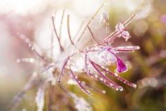 Fiore di rosa selvaggio Fotografia Stock Libera da Diritti