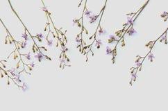 Fiore di rosa selvaggio su bianco Immagini Stock Libere da Diritti