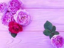 Fiore di Rosa su fondo di legno rosa fotografia stock libera da diritti