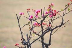 Fiore di rossi carmini Fotografie Stock Libere da Diritti
