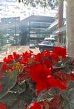 Fiore di rosso di estate Fotografie Stock
