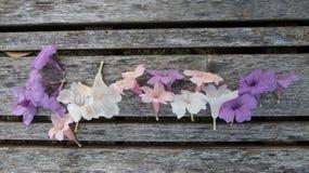 Fiore di Ruellias sul banco di legno immagine stock libera da diritti