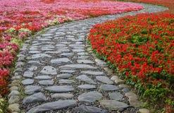 Fiore di salvia splendens e della begonia Immagine Stock