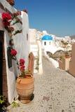 Fiore di Santorini Fotografie Stock Libere da Diritti