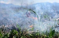 Fiore di scacchi nel fuoco Fotografia Stock