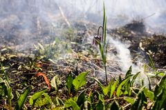 Fiore di scacchi nel fuoco Fotografia Stock Libera da Diritti