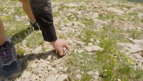Fiore di scavatura della mano femminile da terra rocciosa mentre estate che fa un'escursione in montagna Donna turistica che affe archivi video