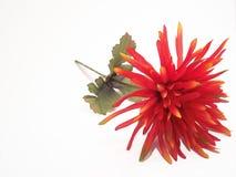 Fiore di seta rosso Immagine Stock
