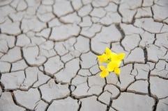 Fiore di sopravvivenza Immagini Stock Libere da Diritti
