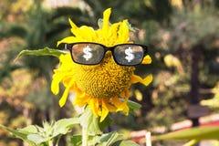 Fiore di Sun Immagine Stock Libera da Diritti