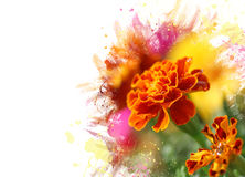 Fiore di Tagetes Immagine Stock Libera da Diritti