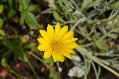 Fiore di tesoro immagine stock